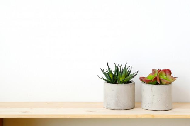 plantas-suculentas-mesa-madera-sobre-fondo-pared-cemento-blanco_7190-354